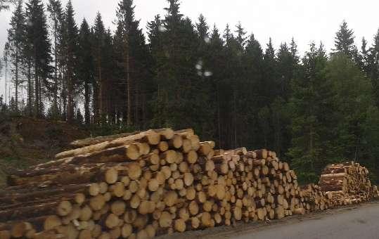 Naše drevo je zo Slovenska