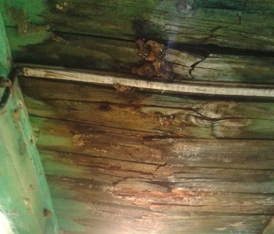 Zhnité dosky na strope
